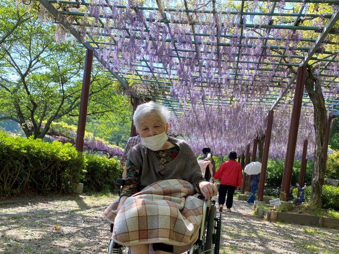 「夢をかなえるツアー第6弾」藤枝・蓮華寺池公園 藤の花